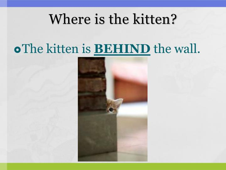 Where is the kitten?
