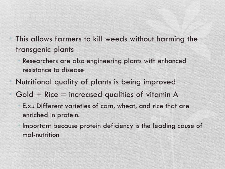 This allows farmers to kill weeds without harming the transgenic plants