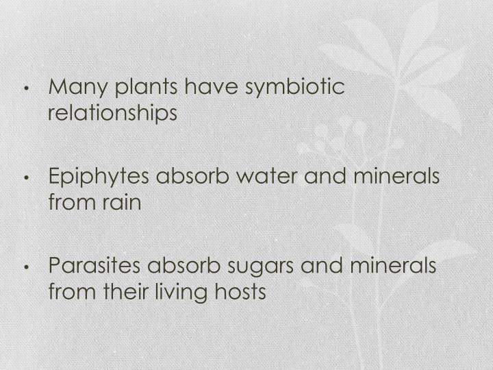 Many plants have symbiotic relationships