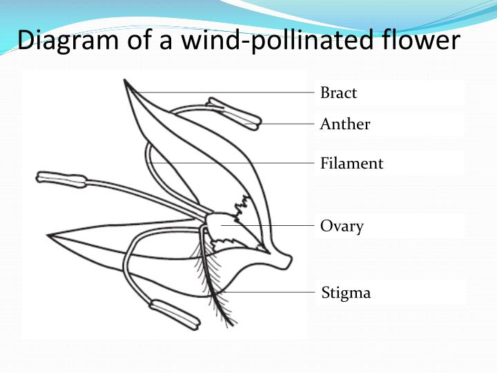 Bird pollinating flower diagram wiring diagram ppt sexual reproduction in plants powerpoint presentation id 2304093 bird pollinating flower diagram ccuart Gallery