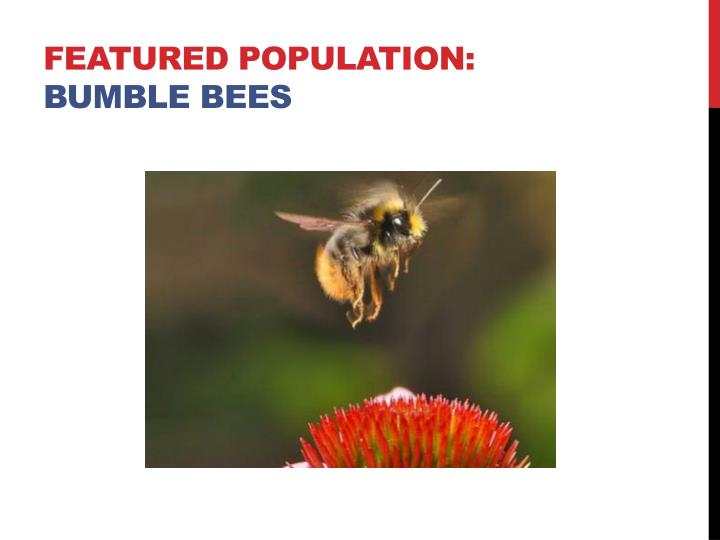 Featured population bumble bees