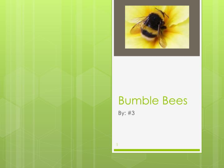 bumble bees n.