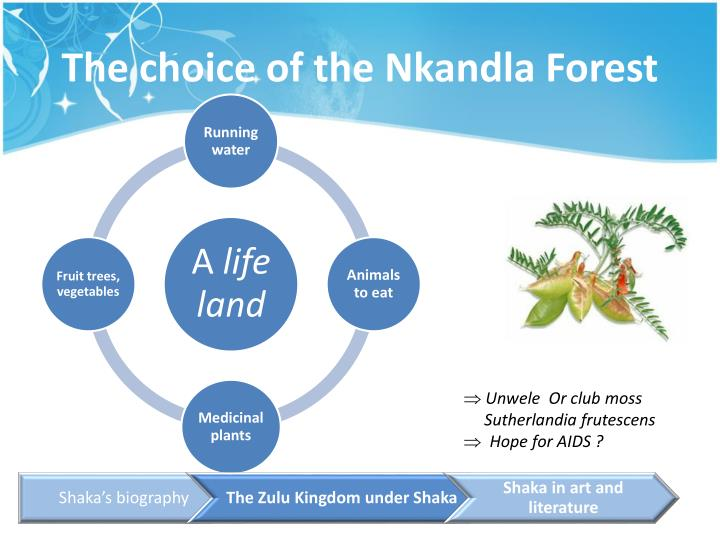 The choice of the Nkandla Forest