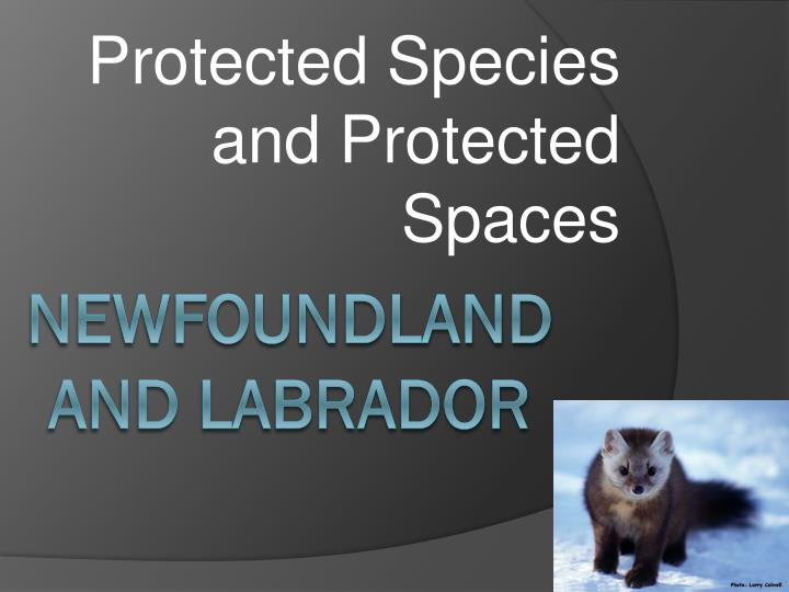 protected species and protected spaces n.