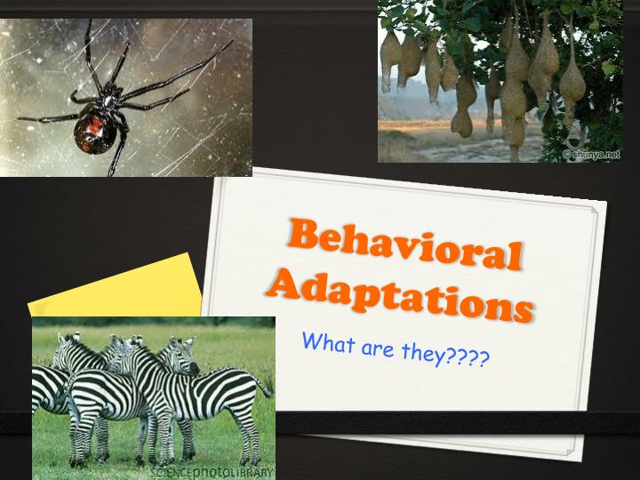 behavioral adaptations n.