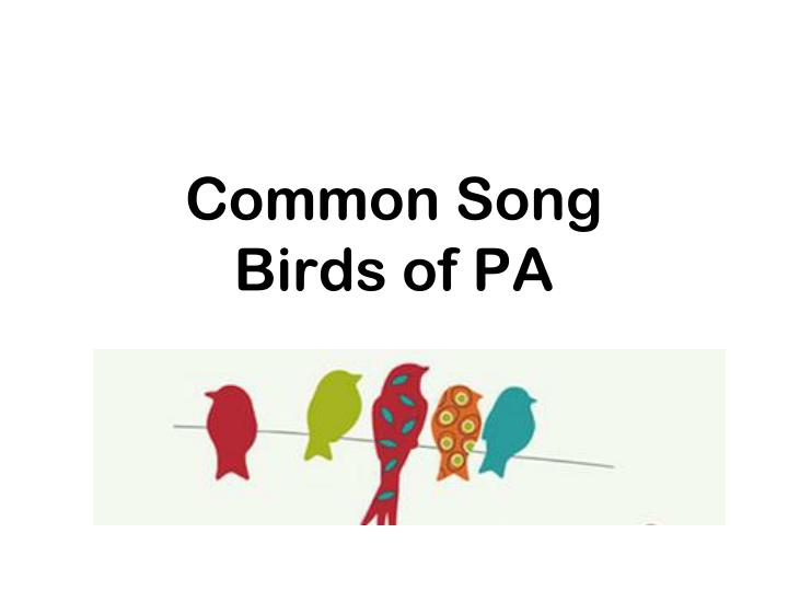common song birds of pa n.