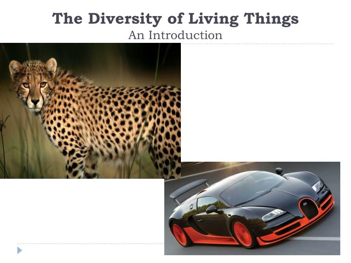 the diversity of living things an introduction n.