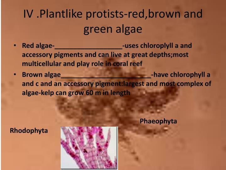 IV .Plantlike