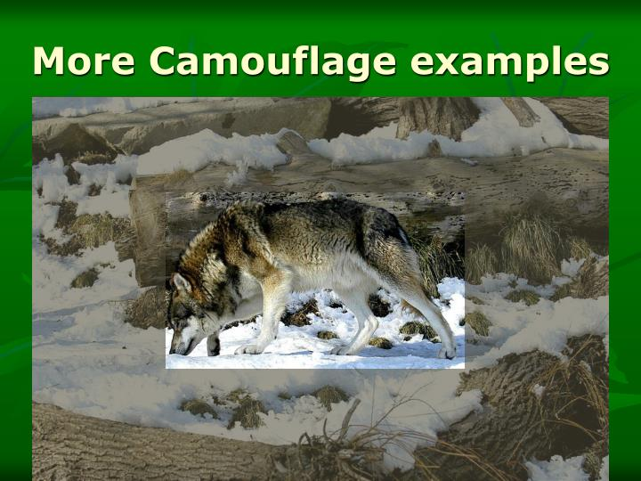 More Camouflage examples