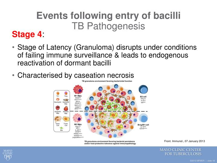 Events following entry of bacilli