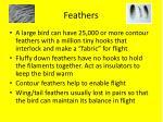 f eathers