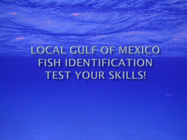 local gulf of mexico fish identification test your skills n.