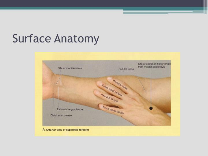 Ppt Hand And Wrist Joint Powerpoint Presentation Id2311245