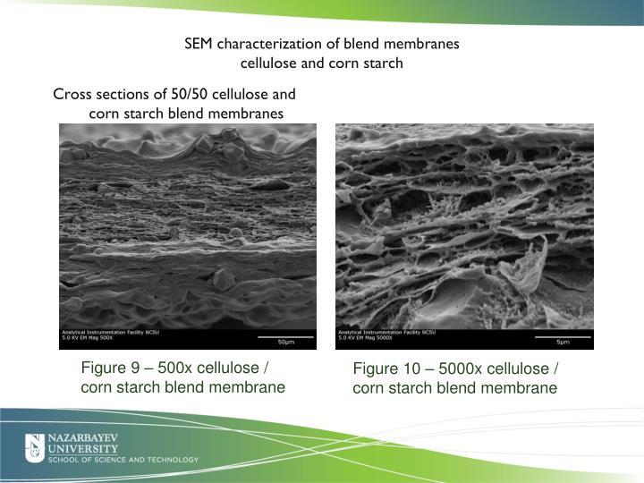 SEM characterization of blend membranes