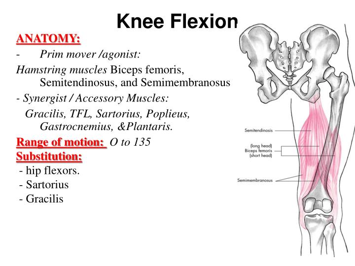 Ppt Knee And Ankle Powerpoint Presentation Id2313117