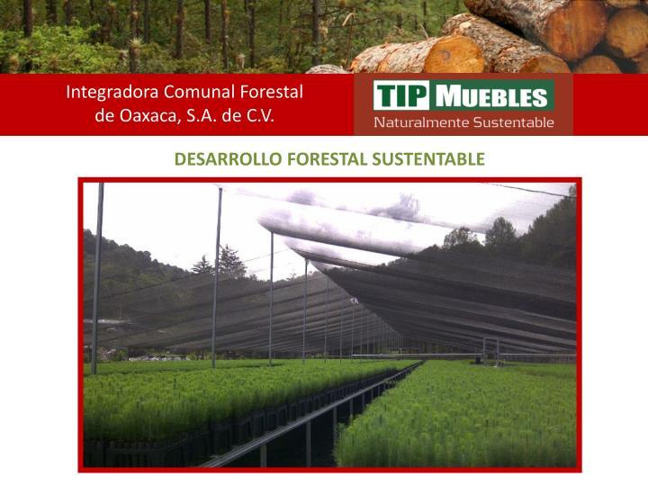 Integradora Comunal Forestal