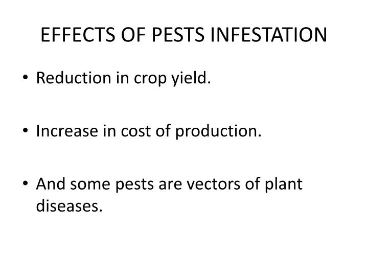 EFFECTS OF PESTS INFESTATION