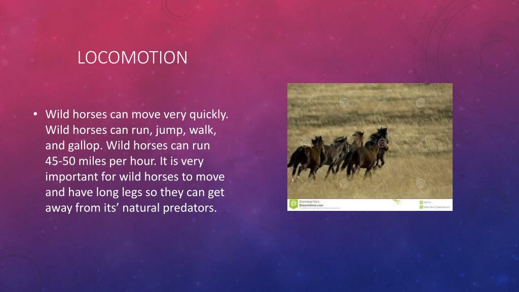 Ppt Wild Horses Powerpoint Presentation Free Download Id 2315545