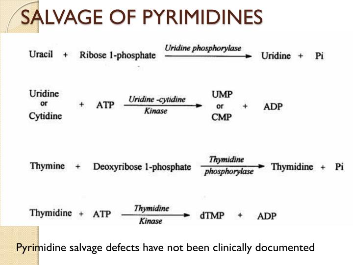 SALVAGE OF PYRIMIDINES
