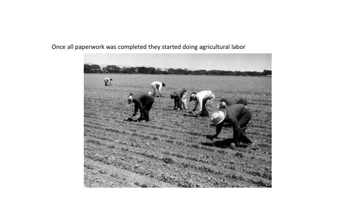 Once all paperwork was completed they started doing agricultural labor