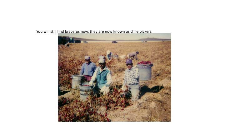 You will still find braceros now, they are now known as chile pickers.