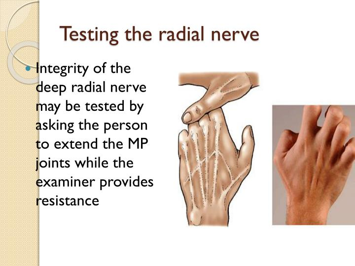 Testing the radial nerve