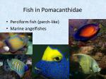 fish in pomacanthidae