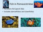 fish in pomacentridae