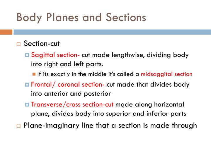 Body Planes and Sections