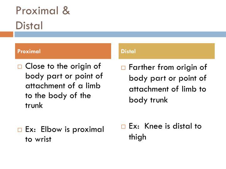 Proximal &