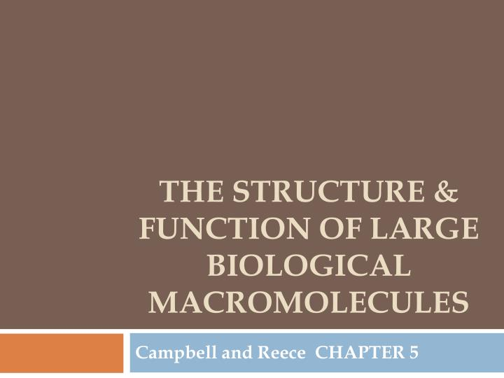 the structure function of large biological macromolecules n.