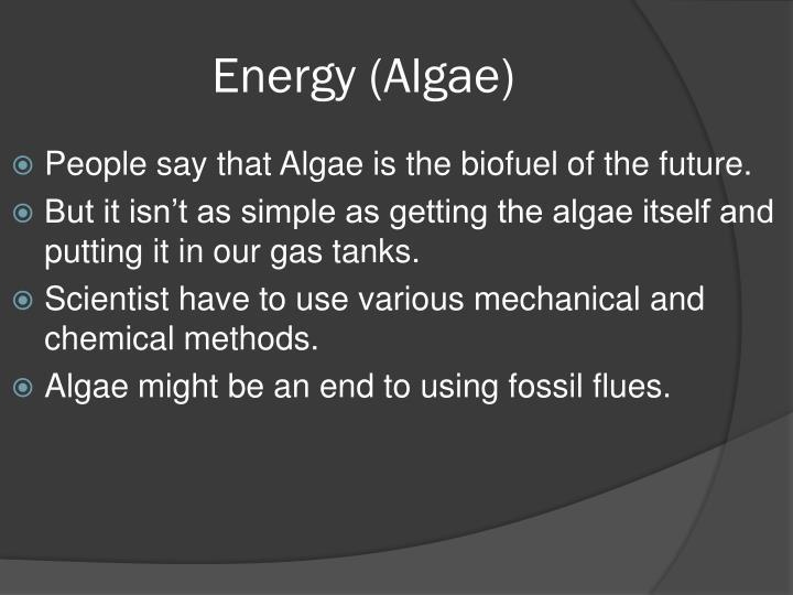 Energy algae