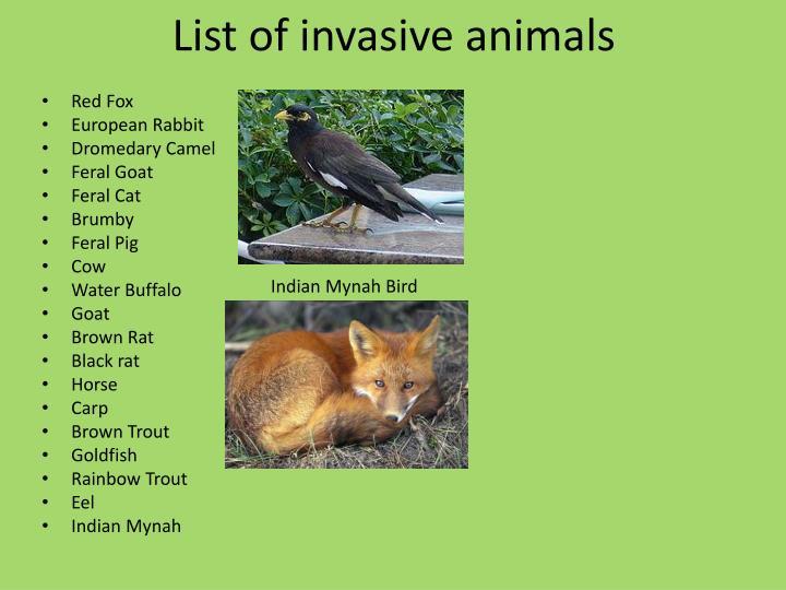 List of invasive animals