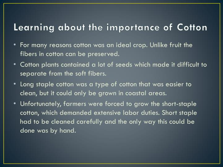 Learning about the importance of Cotton