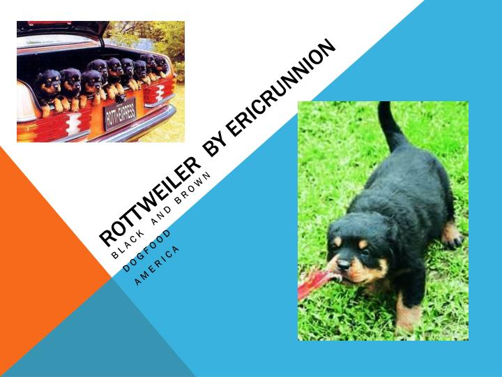 Rottweiler  by