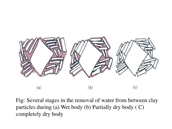Fig: Several stages in the removal of water from between clay particles during (a) Wet body (b) Partially dry body ( C) completely dry body