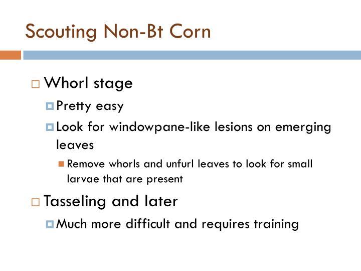 Scouting Non-Bt Corn