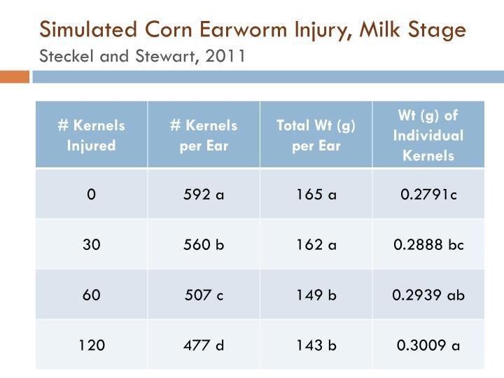Simulated Corn Earworm Injury, Milk Stage