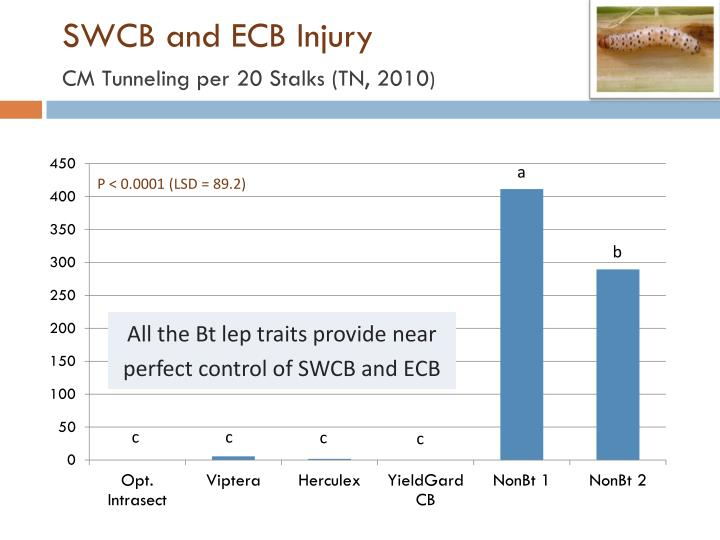 SWCB and ECB Injury