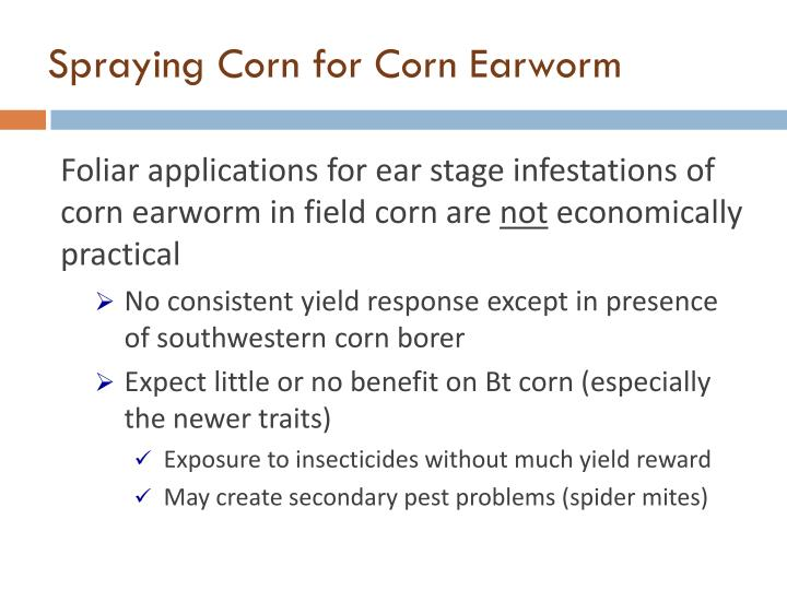 Spraying Corn for Corn Earworm