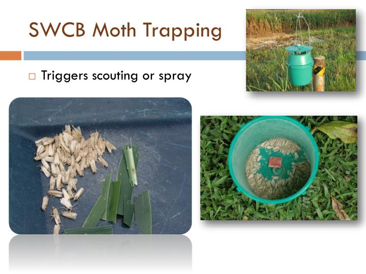 SWCB Moth Trapping