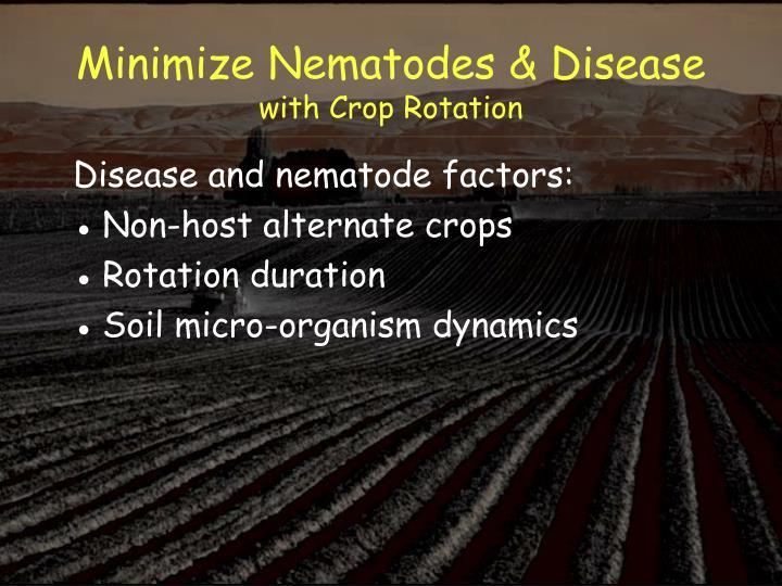 Minimize Nematodes & Disease