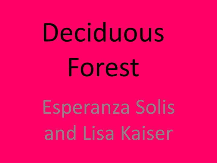 deciduous forest n.