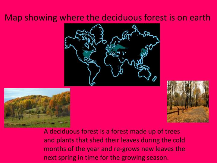 Map showing where the deciduous forest is on earth