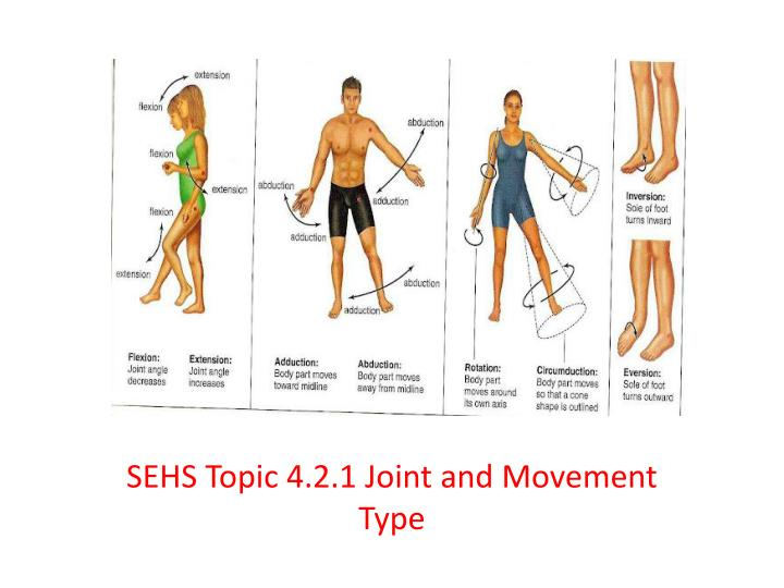PPT - SEHS Topic 4 2 1 Joint and Movement Type PowerPoint