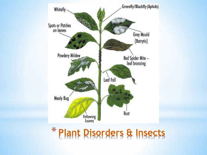 plant disorders insects n.