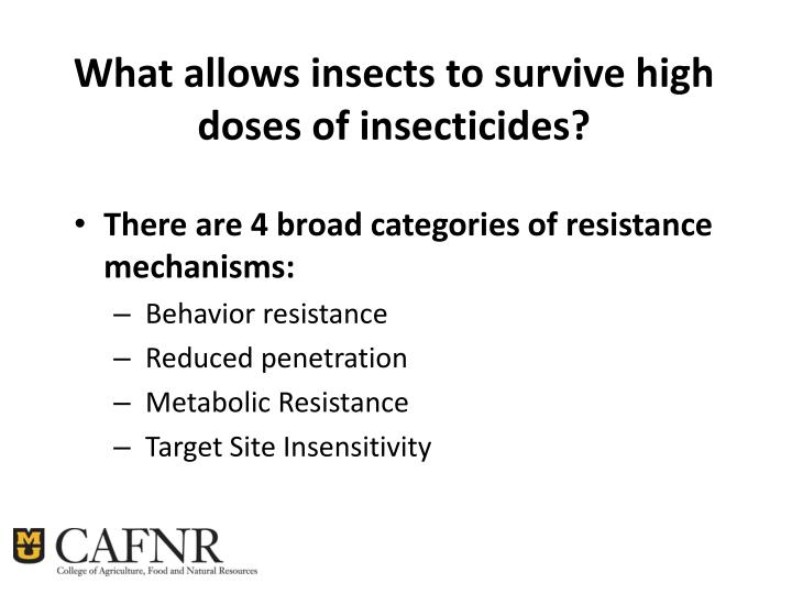 What allows insects to survive high doses of insecticides?
