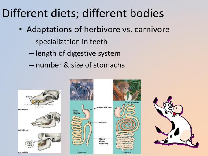 Different diets; different bodies