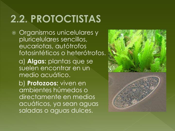 2.2. PROTOCTISTAS