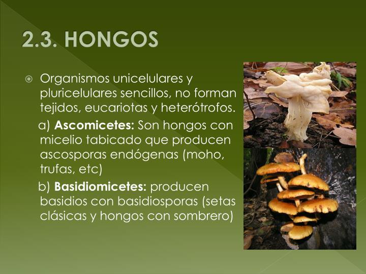 2.3. HONGOS